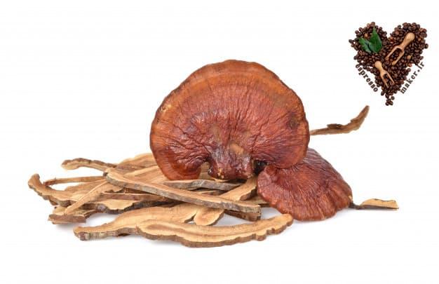 قارچ گانودرما ، قارچ گانودرما چیست