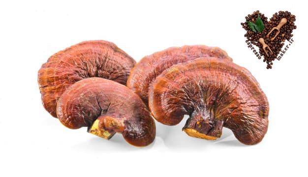 عوارض قارچ گانودرما ، قیمت قارچ دارویی گانودرما