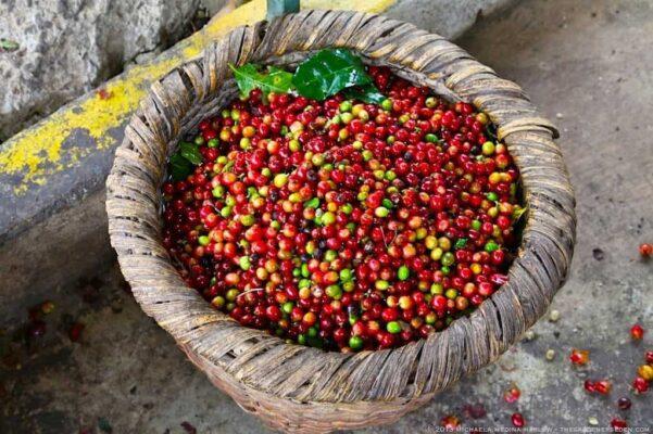 طبع قهوه سبز