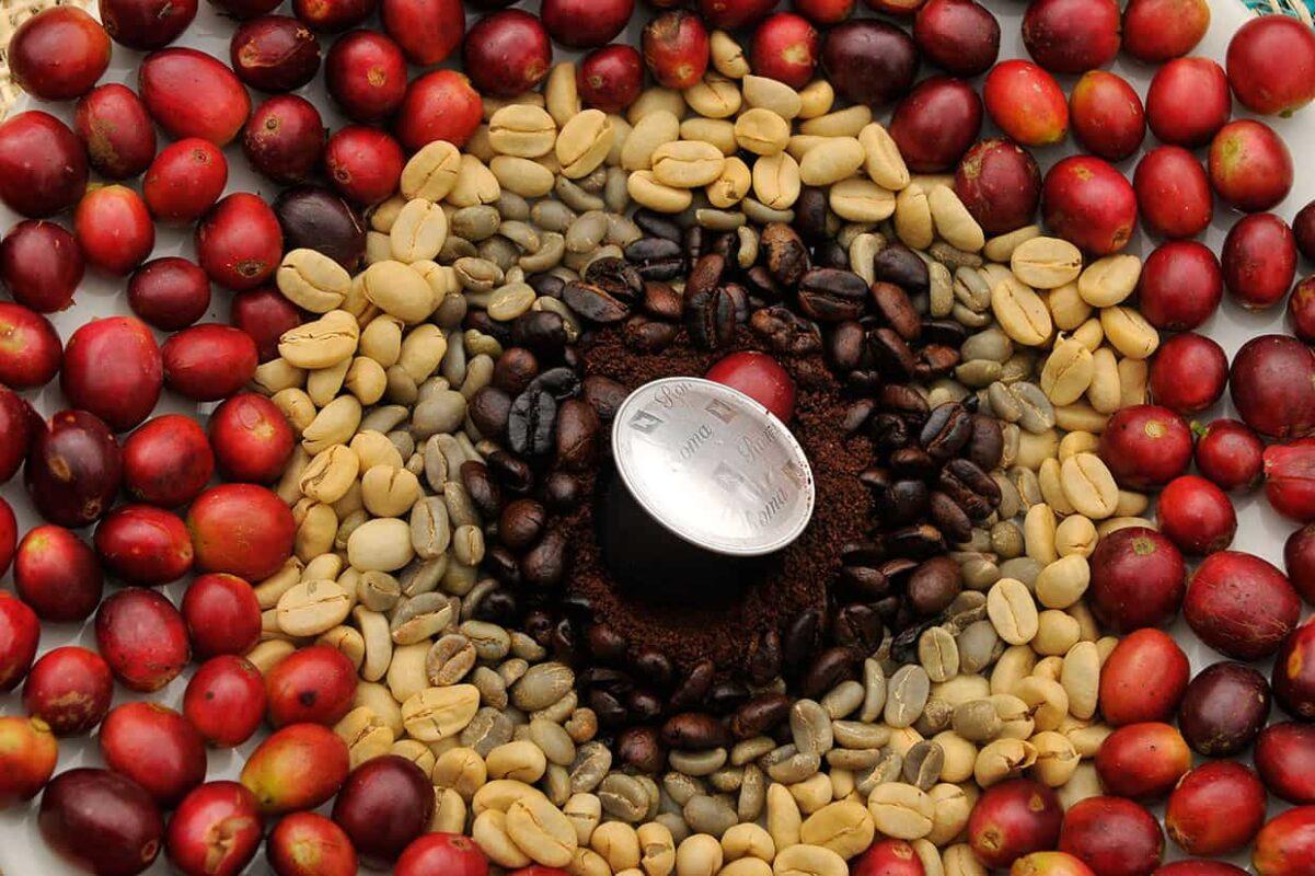 انواع قهوه تفاوت عربیکا و روبوستا